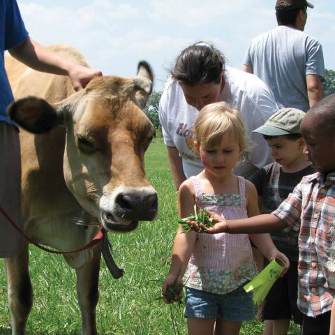 Children and Cow